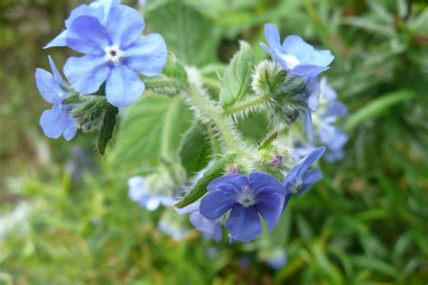 Flowering Nettles | I have been out in The Garden again