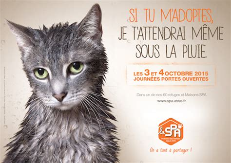 Spa chat - Annonces chatons